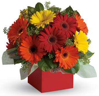 Glorious Gerberas. Description: Brighten their day with this exuberant burst of beauty! Joyful gerberas make everyone smile.