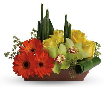 Zen Dreams. Description: Send Zen. Capture the peaceful energy of the rising sun with this artful, Asian-inspired arrangement of orchids,gerberas, roses and tropical greens.