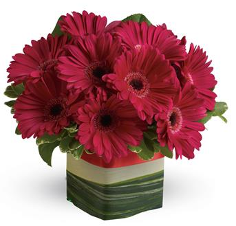 Grand Gerberas. Description: Make a singular statement with this hot pink presentation of everyones favourite gerbera!