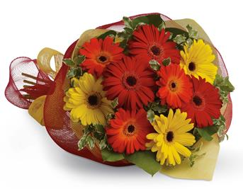 Gerbera Brights. Description: Brighten someones day by sending a beautiful mix of colourful gerberas.
