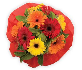 Bright Delight. Description: A bright and funky gerbera bouquet is a sure way to brighten up someones day.