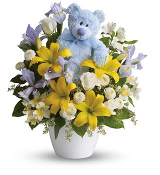 Cuddles for Him. Description: This adorable arrangement will brighten any room with its beautiful blooms and soft blue bear. The perfect gift for a new baby boy!