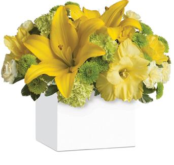 Burst of Sunshine. Description: Shower them with sunshine! An abundance of yellow and green blooms bursts from this stylish container, bringing smiles along with it.