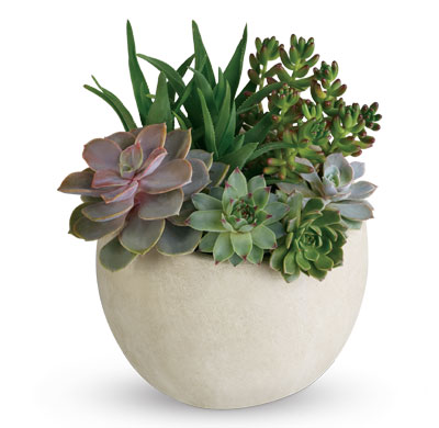 Tirari Beauty. Description: Bring the serene beauty of the desert landscape to any room of the house or office with this glorious growing gift.